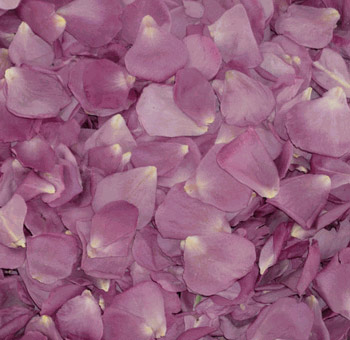 Freeze Dried Lavender Rose Petals
