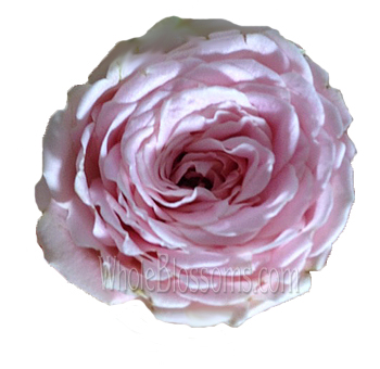 Lea Romantica Spray Garden Rose Pink Flower