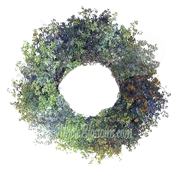 Leafless Seeded Wreath