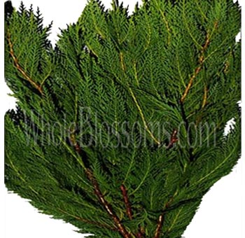 Leyland Cypress Green Flower Filler