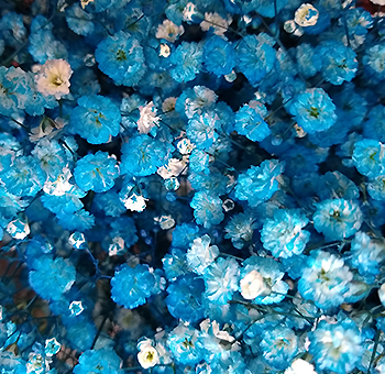 Turquoise Baby Breath Flowers