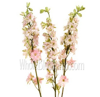 Larkspur Light Pink Flower