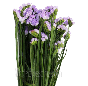 tissue culture wholesale statice flower lilac for wedding