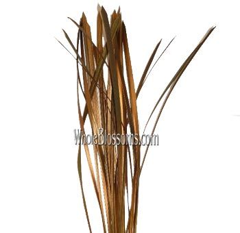 Lily Grass Metallic Bronze Flower Filler