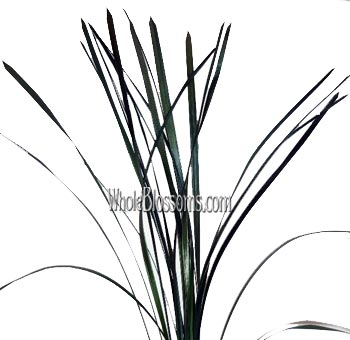Lily Grass Metallic Green Flower Filler
