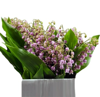 Lily of the Valley Pink - 25 Stems