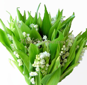 lily-of-the-valley_wholesale-flowers