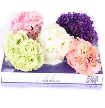 Lisianthus Assorted Gift Box