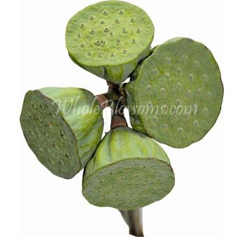 Buy Fresh Cut Bulk Lotus Flowers At Wholesale Lotus Flower Online