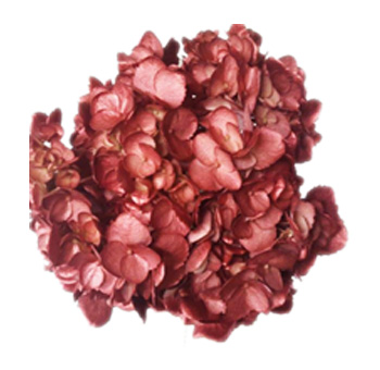 Metallic Burgundy Airbrushed Hydrangea
