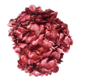 Metallic Glitter Burgundy Airbrushed Hydrangea