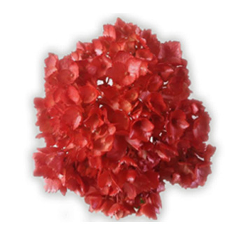 Metallic Red Airbrushed Hydrangea