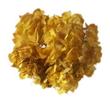Metallic Yellow Hydrangea