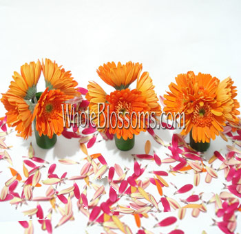 Orange Gerbera Mini Wedding Centerpieces