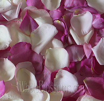 Blush and Dark Pink Rose Petals
