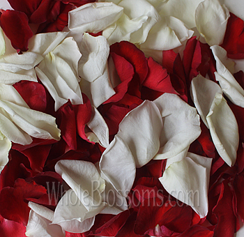 Mix Red White Rose Petals