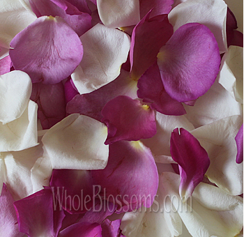 Fragrant Mix White and Hot Pink Petals
