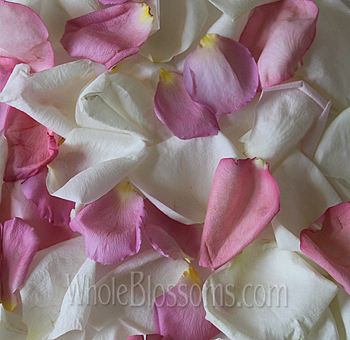 Mix White Pink Rose Petals