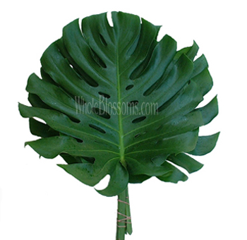 Monstera Filler