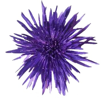 Purple Mums Metallic Glitter Anastasia Flower