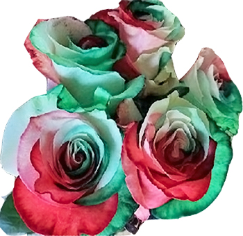North Pole Green Red and White Rose Holiday Flowers