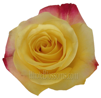 3D Novelty Bicolor Rose