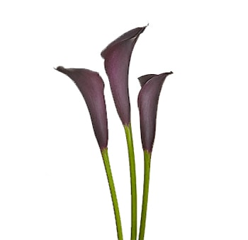 Dark Purple Calla Lily Flower Bouquets
