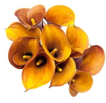 orange mango calla lilies