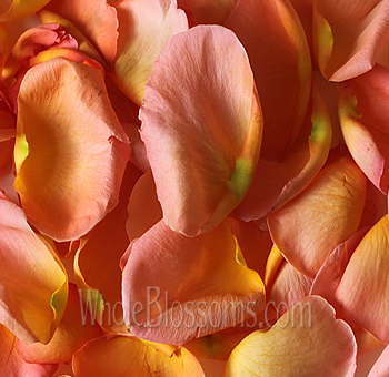 Fragrant Orange Rose Petals