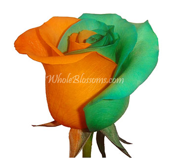 Tinted Orange Green Rose for Valentine's Day