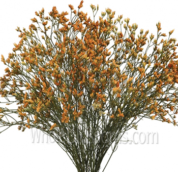 Limonium Tinted Orange Flower