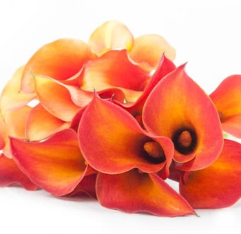 Orange Calla Lily Flower Mix
