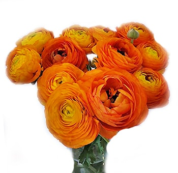 Ranunculus Orange Flowers