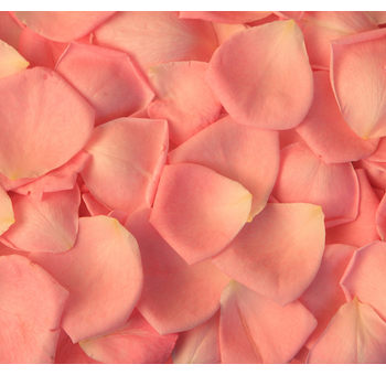 Orange Salmon Rose Petals for Valentine's Day