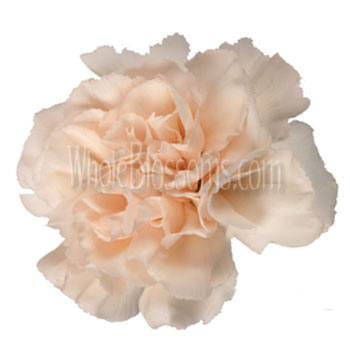 Peach Carnations for Valentine's Day