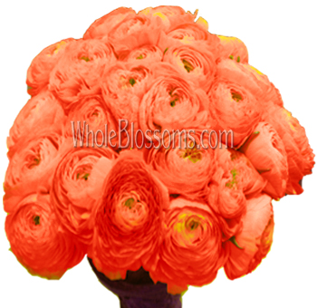Salmon Peach Ranunculus Flower