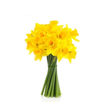 Pencil Daffodil Yellow Flowers