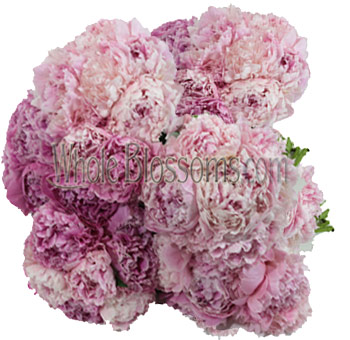 Pink Peony Wholesale Flowers