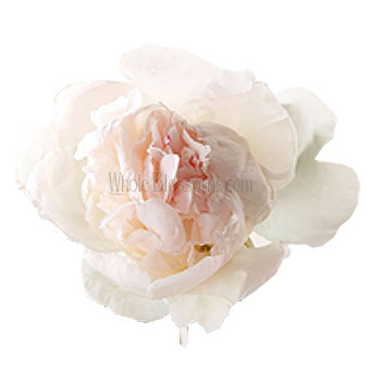 Blush Peony Wedding Flowers