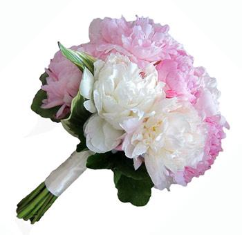 Peonies wedding flowers buy wholesale peonies in bulk pink peony flowers in january mightylinksfo