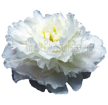 White Peonies Wedding Flowers
