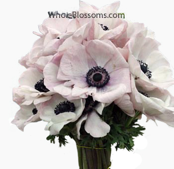 Bulk light pink anemone flowers anemone blush tinted dark center mightylinksfo