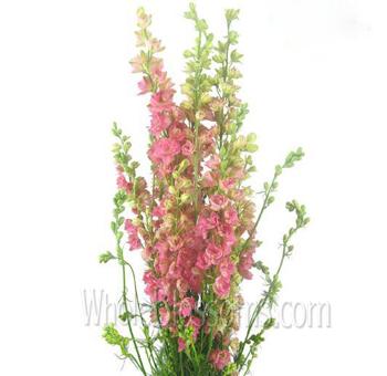 order larkspur pink flower for wedding at wholesale prices