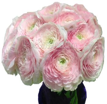Buy pink ranunculus flower in bulk at wholesale prices pink ranunculus flower mightylinksfo