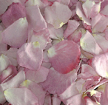 Pink Rose Petals Freeze Dried