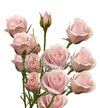 Spray Rose Pink Flower Majolika