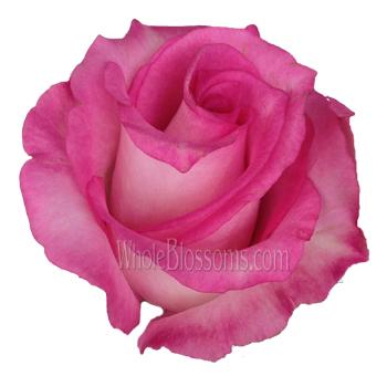 priceless pink organic roses