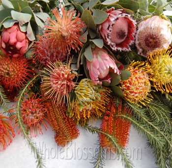 Protea Mix Flowers
