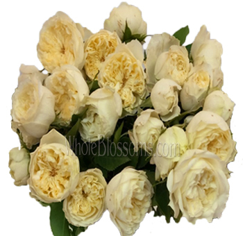 Purity Spray Garden Roses