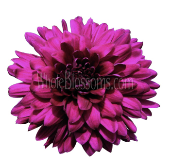 Cremon Disbud Flower - Purple Pink